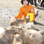 ■水森かおりが千葉・市原サユリワールド&市原ぞうの国でファン50人と秋のスペシャルイベント。キリンに餌をやり、カバの背中乗りにも挑戦